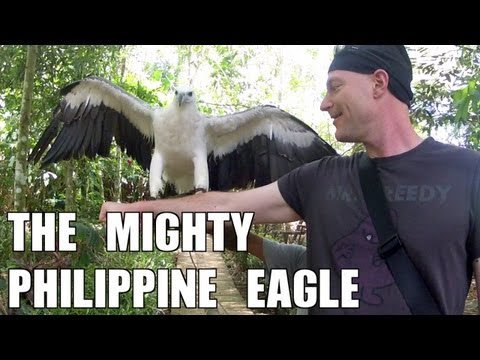 The Mighty Philippine Eagle
