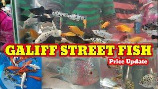Recent Fish Price In Kolkata🔥🔥 Market Galiff Street Pet Market🔥🔥 Galiff Street fish Market