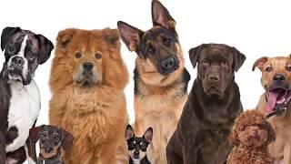 можно ли собаку вылечить от чумки и других вирусных болезней водкой с яйцом и как это помогает