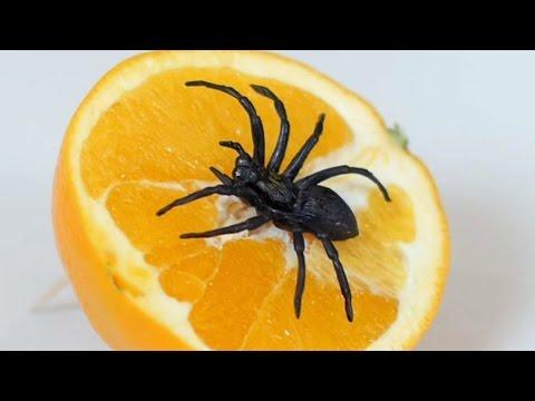 SPIDER IN ORANGE!