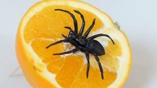 spider in orange