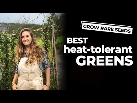 GROW RARE SEEDS | Best Heat-Tolerant Greens