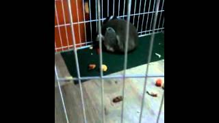 VID20140921160139 попугай и лемур