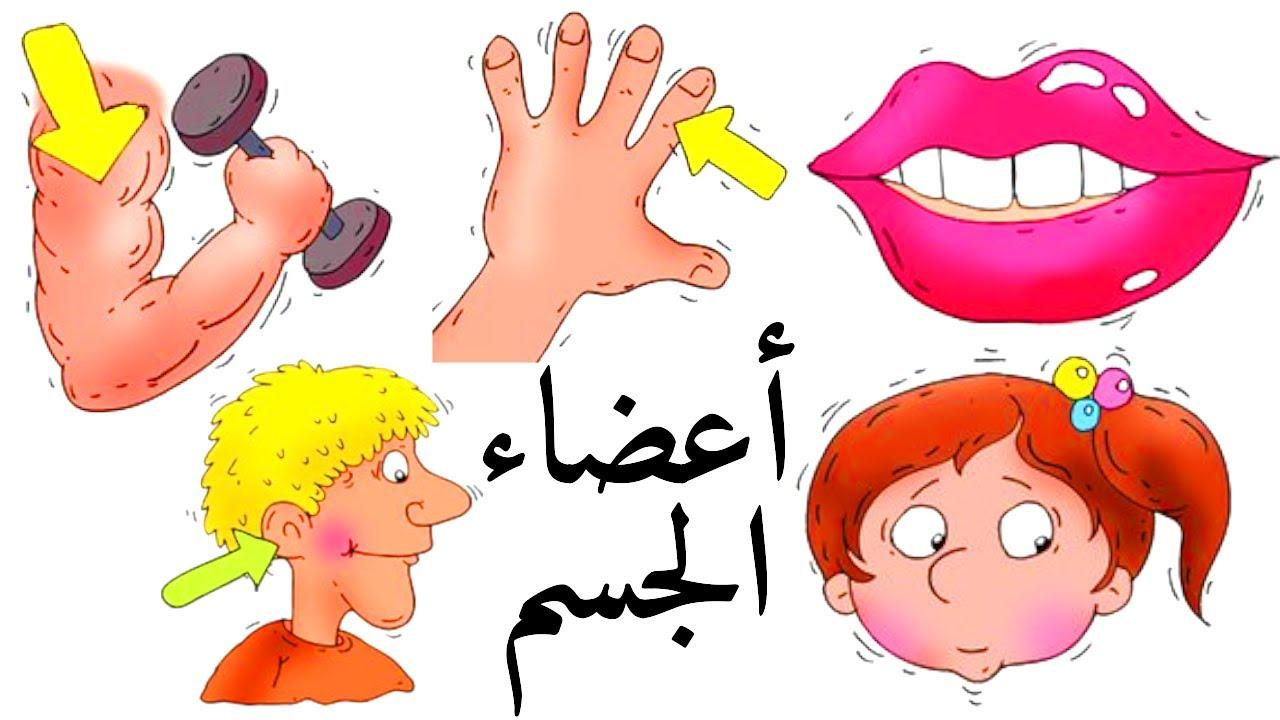 تعليم اجزاء جسم الانسان للاطفال | تعليم جسم الانسان للاطفال | تعليم جسم الإنسان للأطفال