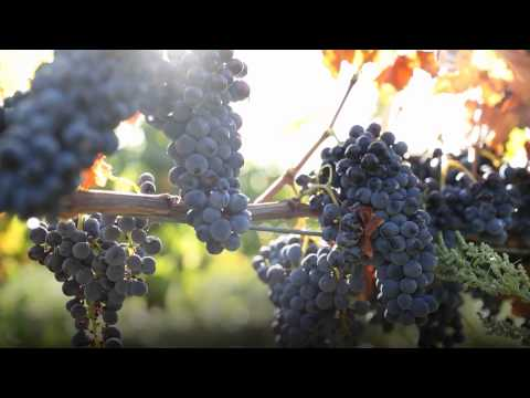 wine article Film Chateauneuf du PapeUK