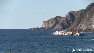 Japan scenery 北海道の景色 尾花岬(Cape Obana)北海道西