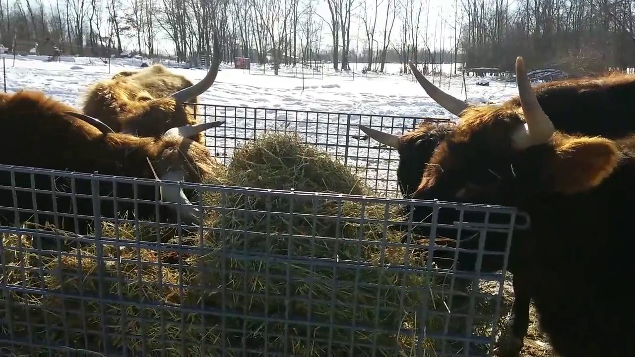 for thread their cows against locally looks faces found tyjpnaf in rub a wood too big between keeping slats or they less the this to is spacing maybe will that work hay be about enough slat feeder