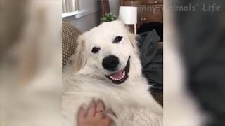 Funny Cats and Dogs Compilation Top