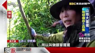 勇闖烏干達迷霧森林 追蹤瀕危大猩猩