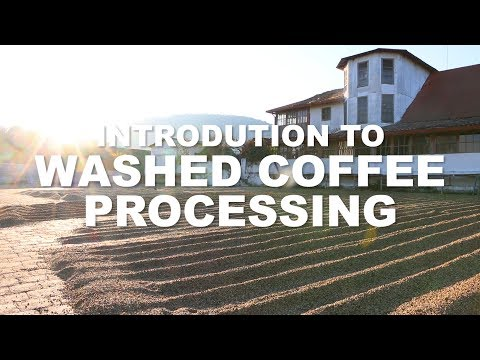 Introduction to Washed Coffee processing