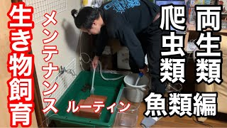 はっさくです! カメの水換えの頻度が1番多く量も多いので1番大変です。カエルはうんちだけでなく、おしっこもよくするのでその度にケージは洗っていますが、給餌自体は ...