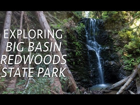 Big Basin Redwoods State Park Hikes: Berry Creek Falls & Redwoods Trail