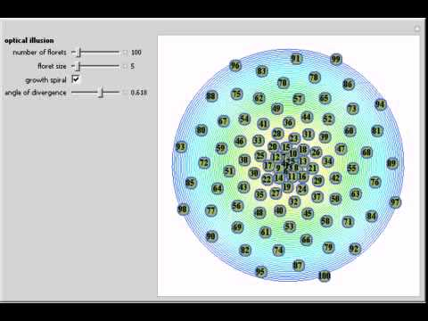 Phyllotaxis Explained