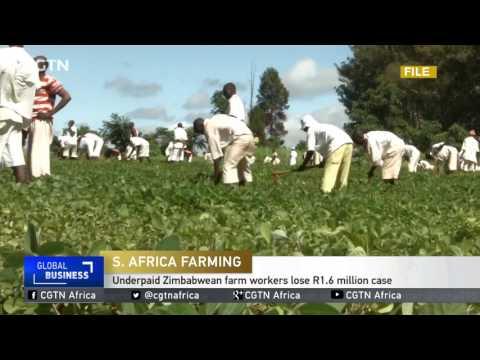 Underpaid Zimbabwe farm workers lose R1.6 million case
