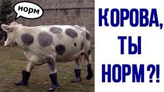 Ржачные приколы. Корова, ты НОРМ?!