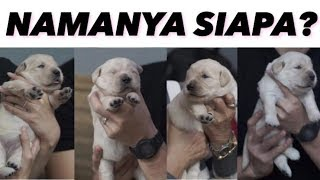 YANG DITUNGGU, INI DIA NAMA THE GOLDEN PUPPIES! | THE GOLDEN FAMILY