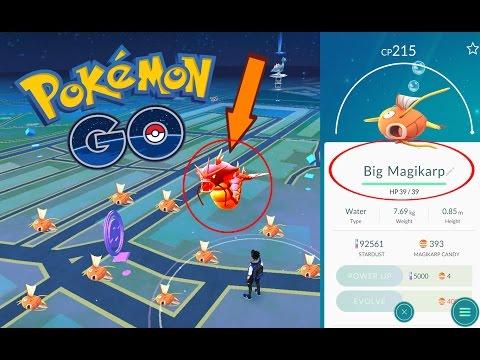RARE GYARADOS HIGH CP AND IV | Pokemon Go | 400X MAGIKARP CANDY EVOLVED INTO A  CRAZY GYARADOS