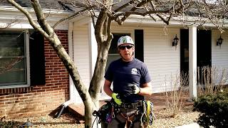 When is the best time to prune spring flowering trees?