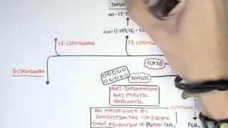 Part II - Aracidonic Acid Metabolites