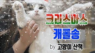 크리스마스 캐롤송  : Special Edition |…