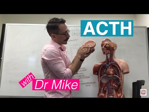 Adrenocorticotropic Hormone (ACTH) | Adrenal Gland