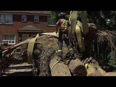 $80,000 tree removal largest in GTA history