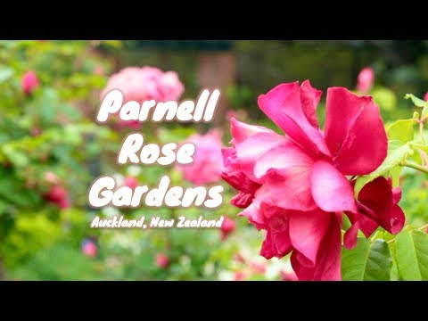 Parnell Rose Garden, Auckland | New Zealand Attractions [Full HD]
