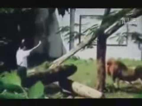 10 clip sư tử cắn người