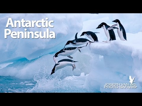Antarctic Peninsula Photography Tour
