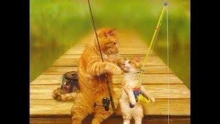 Смешные кошки и котята