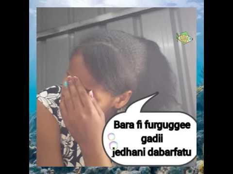 Arrabso lafarra gooftaa meqasaa danda'uu waanta baay'ee dhufa Kan nama dorsiisu