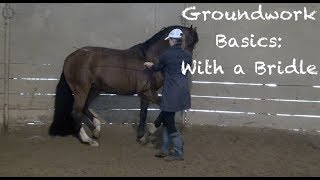 Groundwork Basics - With a bridle