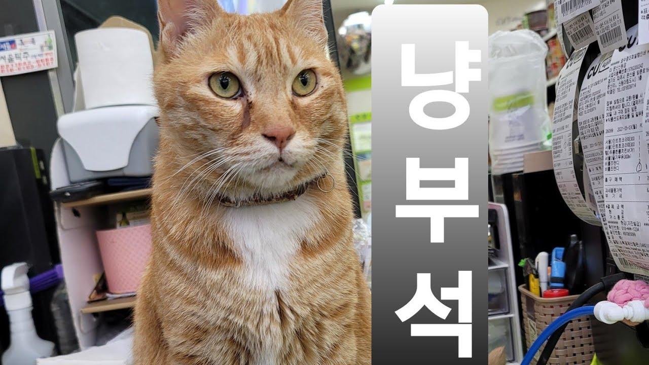 옛날옛적에~편의점에 고양이 알바생이 살고있었다지(뽀너스 영상도 있어요!!)
