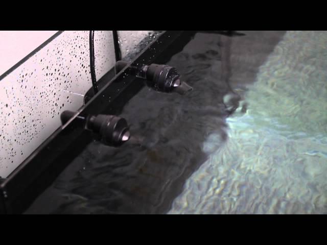 Innovative Marine AUQA Gadget Spin Stream on JBJ 45 Gallon RL Aquarium