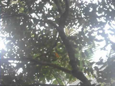 shyama sundara bhoomi [keralam].mp4