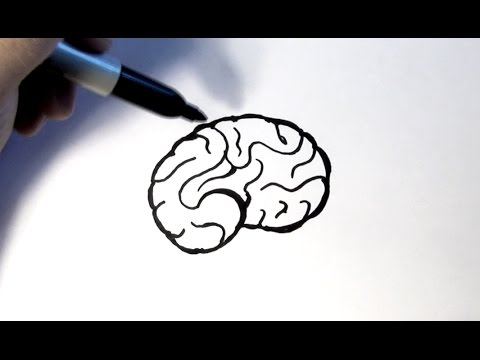 how to draw a brain youtube rh youtube com How to Draw a Outline of the Brain Easy How to Draw a Brain