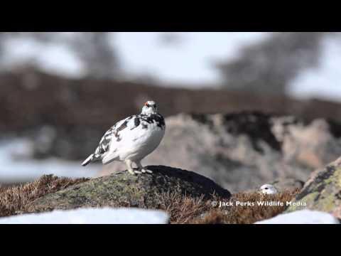 Wildlife Showreel: Jack Perks Wildlife Media