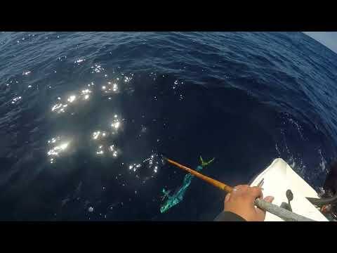 San Diego Offshore Dorado and Yellowfin Tuna 9/23/17