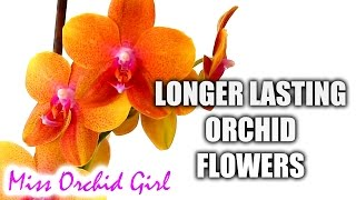 How to make Orchid blooms last longer