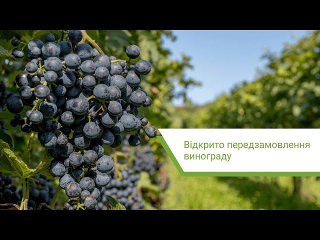 Відкрито передзамовлення винограду