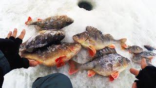 ОКУНИ РАЗМЕРОМ С РУКУ Вот оно РЫБАЦКОЕ СЧАСТЬЕ Зимняя рыбалка с ночёвкой в палатке
