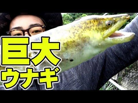沖縄の巨大ウナギの釣り方【前編】【オオウナギ】