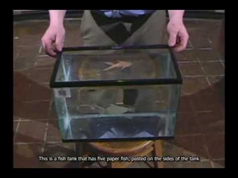 Fish Tank - Reflections And Refraction