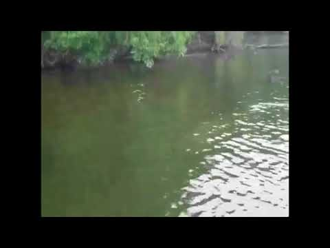 'Baby, you don't see that here': Manatee reported in spillway