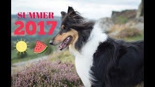 Summer 2017 ☼    Chilterncollie ♡