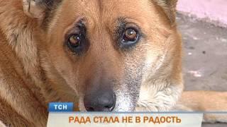 В Перми выгоняют на улицу собаку, 15 лет прожившую в троллейбусном депо
