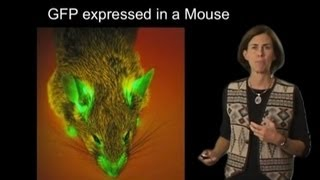 Jennifer Lippincott-Schwartz (NIH) Part 1: Intracellular Fluorescent Imaging: An Introduction