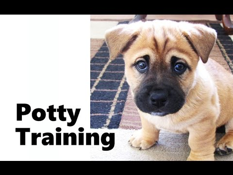 House training bullmastiff puppy names