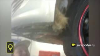 В Сыктывкаре спасли котёнка, который застрял внутри автомобиля