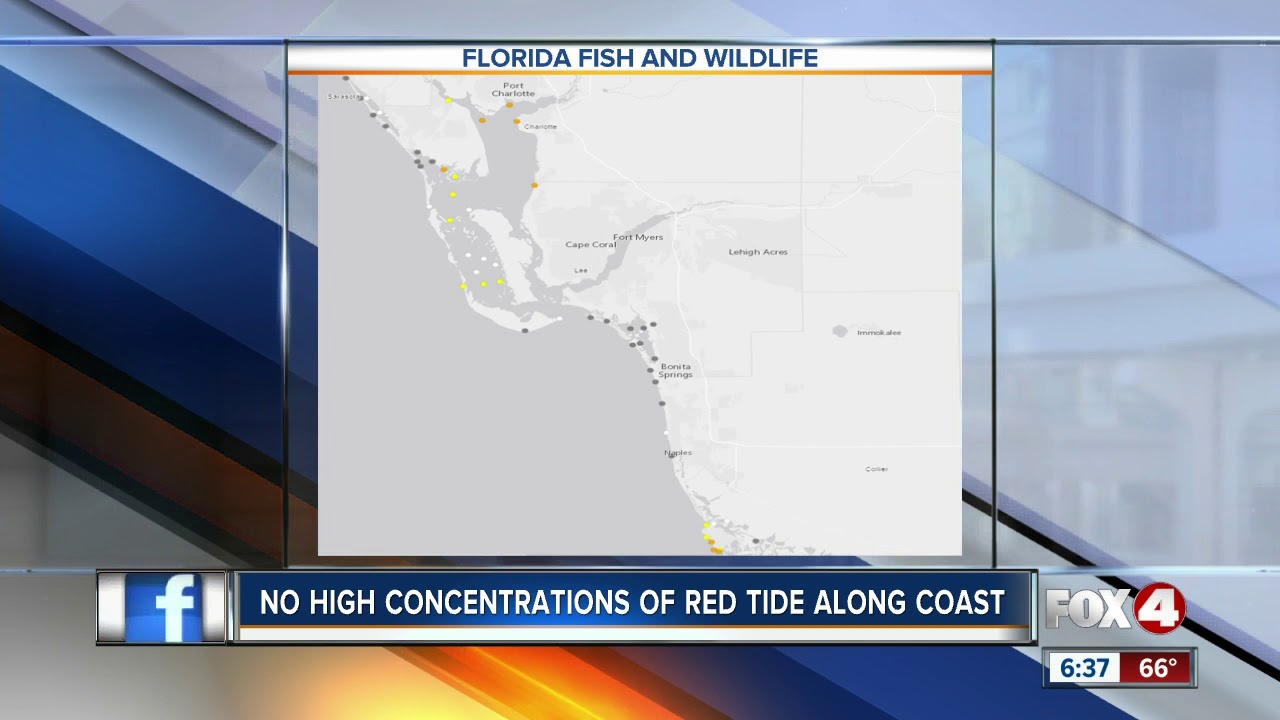 Red tide appears to be decreasing in Southwest Florida